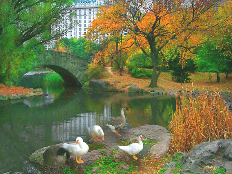 Bird Watching In Central Park